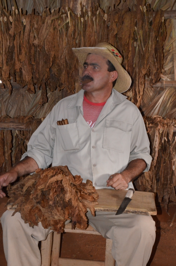 Benito, with the toabcco bouquet on his knee, preparing to roll out a famous Cuban Cigar.