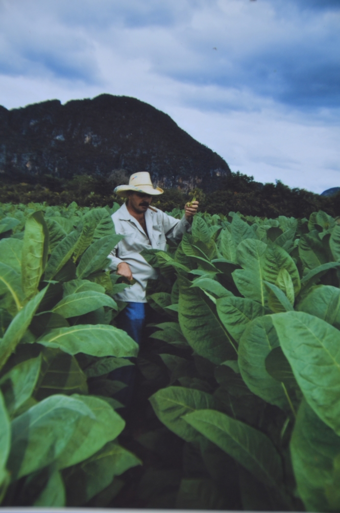 Benito in his tobacco field.