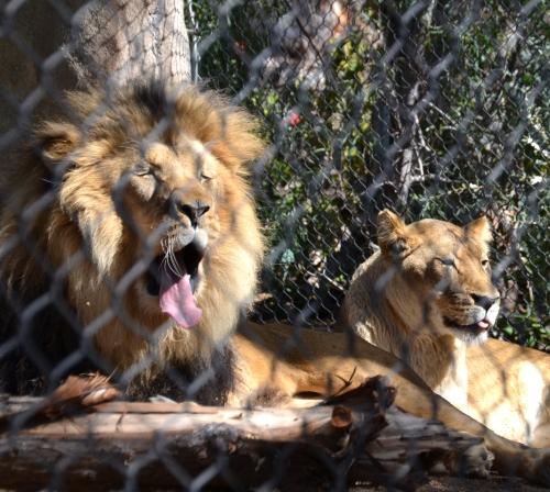 OH, what a big yawn!