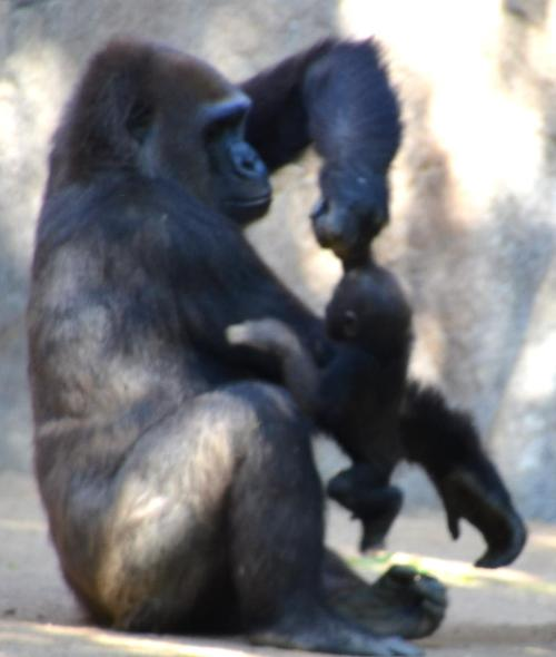 Imani lifted baby Joanne up to her back so they could move away from the  sparing boys.