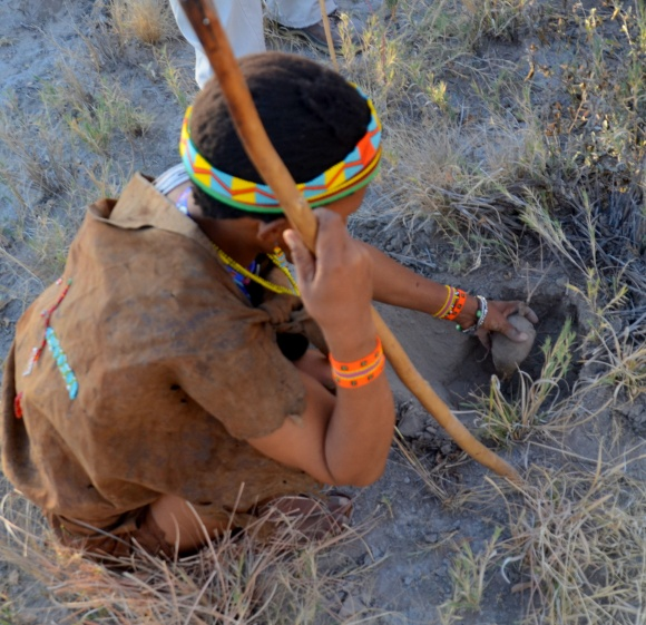 Digging up a bi bulb tuber in the Kalahari Desert