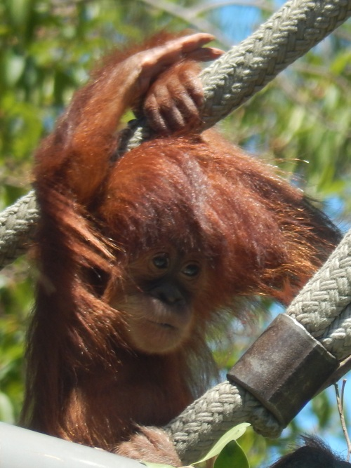 Photo by Denise Carlson of Aisha holding on the rope real tight.